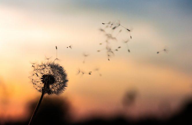 Achtsamkeit lernen und leben - 5 Wege für deinen Alltag